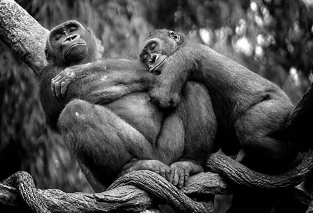 14 трогательных фото-кадров проявления любви и нежности у животных и птиц