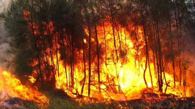 Забайкальские леса горят на площади 245 гектаров