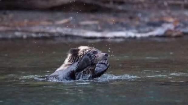 У медведицы не получалось спасти медвежат из холодной воды. На помощь пришли рыбаки!