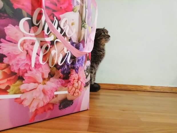 подарочный пакет на фоне Феликса для поднятия настроения