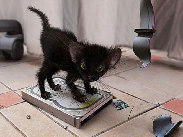 Байки про котов 14