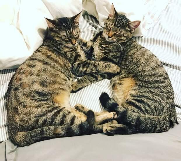 «Иди ко мне, котик! Я тебя любить буду!» Между ребёнком и кошкой возникла тесная связь…