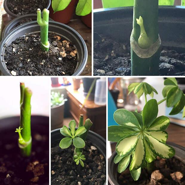 30 раз, когда кто-то спас своё любимое растение — и дал надежду миллионам!