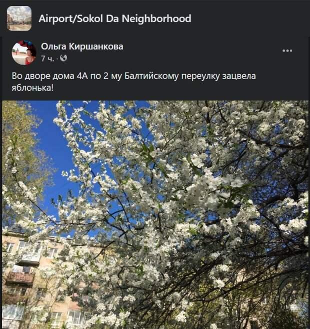 Фото дня: во 2-м Балтийском переулке зацвела яблоня