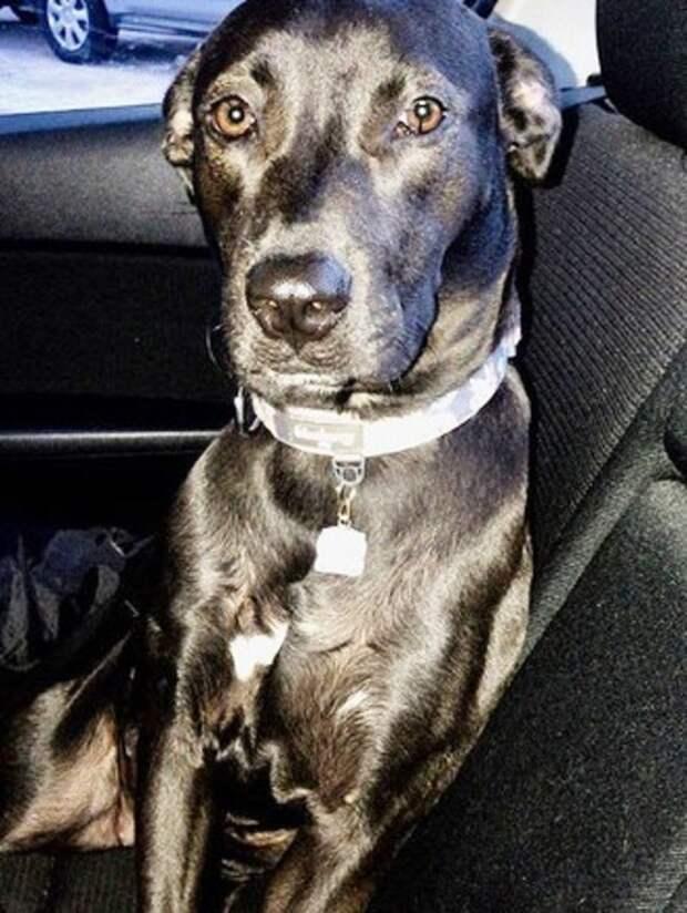 Собака из приюта провожала человека просящим, долгим взглядом… И он обернулся!