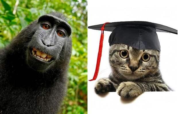 Кот-ученый и обезьяна-фотограф: поразительное творчество креативных животных