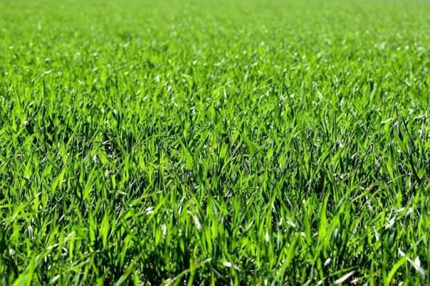 Во дворе на Путевом восстановили газон