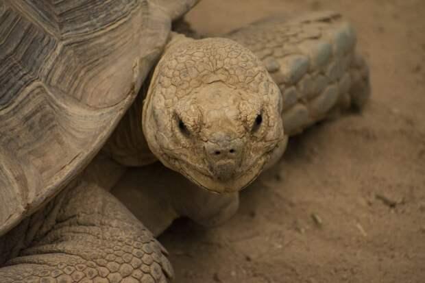 Портрет черепахи. Фото: unsplash.com