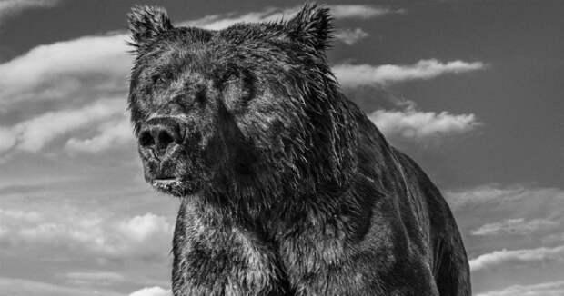 «Я гонялся за этим леопардом полтора часа»: история создания легендарных кадров лучшего фотографа дикой природы Дэвида Ярроу