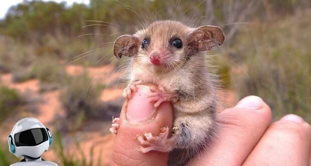Самые милые и смешные животные о существовании которых вы не знали