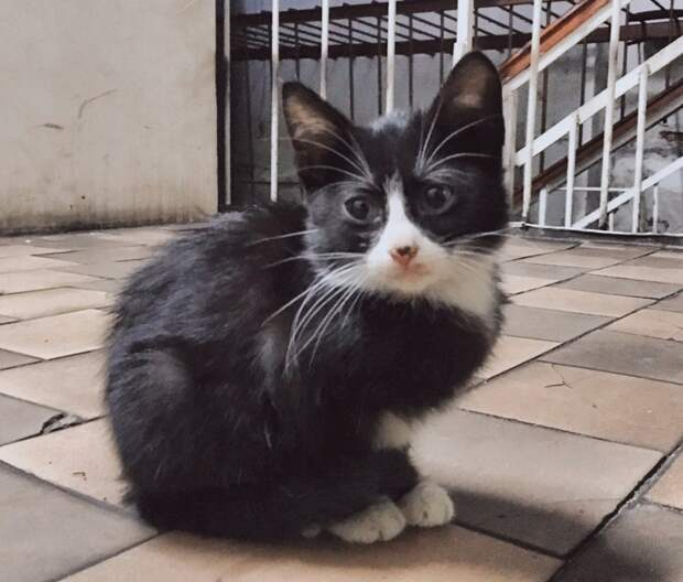 """Одному ,,человеку"""" пришла идея потравить кошек. Умоляем Вас о помощи. Иначе """"завтра"""" для этих крошечных доверчивых сердец может не наступить!"""