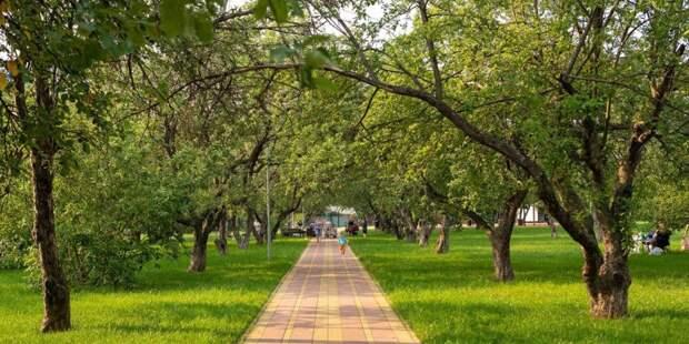 В текущем году в СЗАО благоустроено свыше 40 гектар территорий. Фото: mos.ru