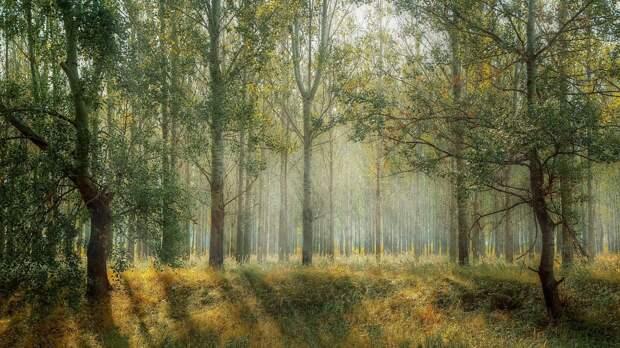 Леса Удмуртии из-за жары вновь закрыли для посещения