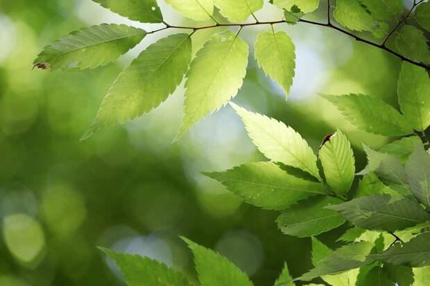 Состояние Союза, Грин, Лист, Природа, Листья, Растения