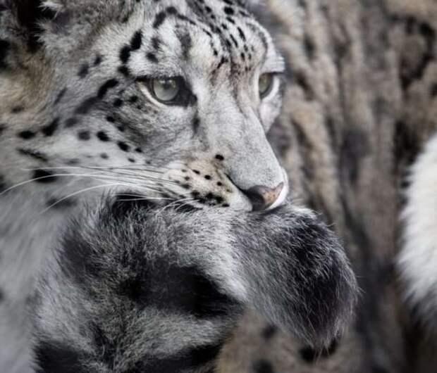 18 ошеломительных доказательств того, что у природы неуемная фантазия