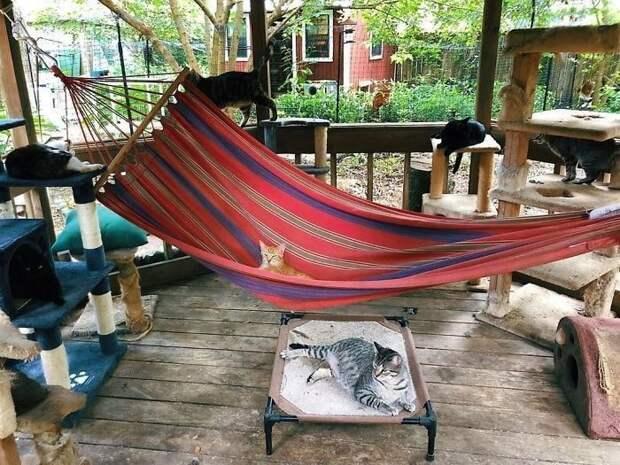 Рай для кошек: патио для прогулок, чтобы ваш любимец не скучал без вас