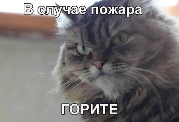 1453387445_memy-s-zhivotnymi-7