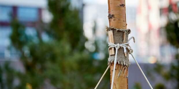 В сентябре в Кузьминском лесопарке снова появятся саженцы «Нашего дерева»
