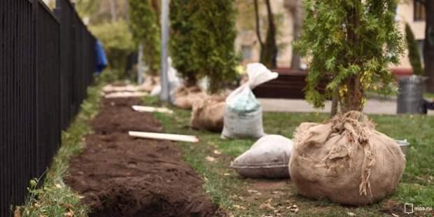 В Бумажном проезде высадят более 100 деревьев