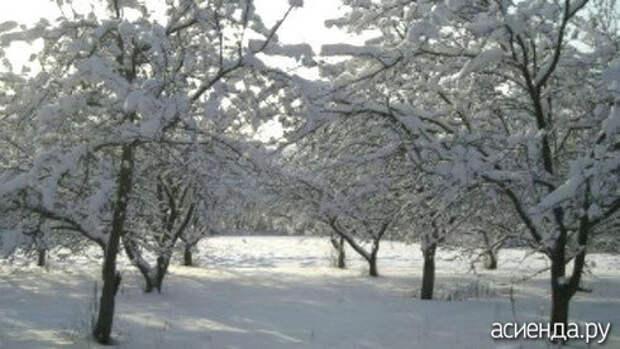 Народный календарь. Дневник погоды 13 января 2021 года