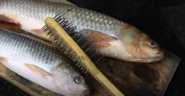 Как быстро почистить свежую рыбу от чешуи