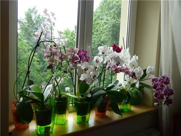 И в этом есть смысл: Орхидея — растение-эпифит. истории, опасность, орхидея, цветы