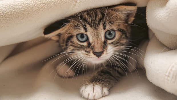 Житель Калуги убил соседа из-за котенка