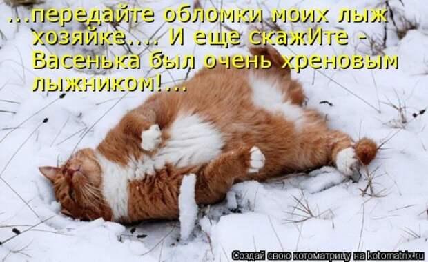 Котоматрица :)