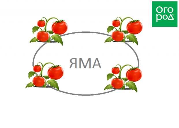 Схема посадки помидоров