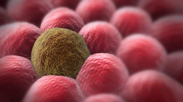 Механизм борьбы со стареющими клетками нашли ученые