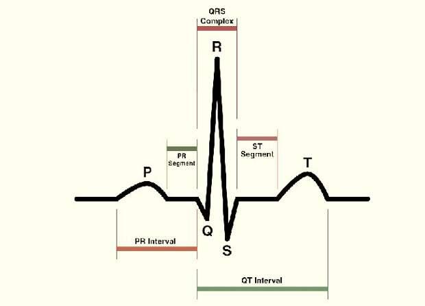 Кардиограмма сердца и ее расшифровка - как делают и в каких случаях