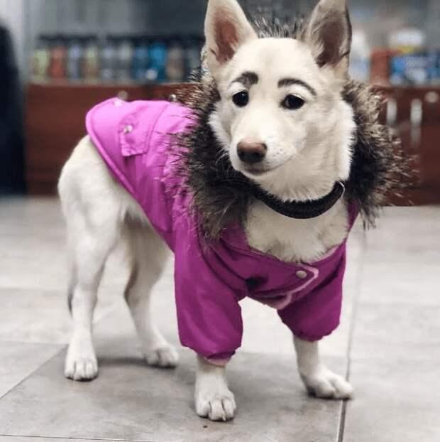 Собака с человеческими бровями обрела дом