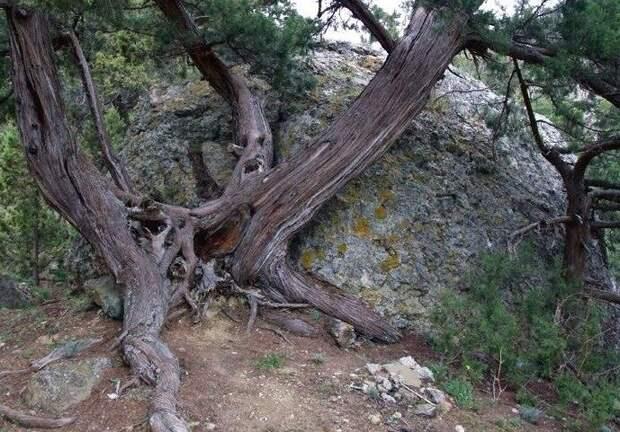 Фото предоставил  исследователь  Коломенских лесов.