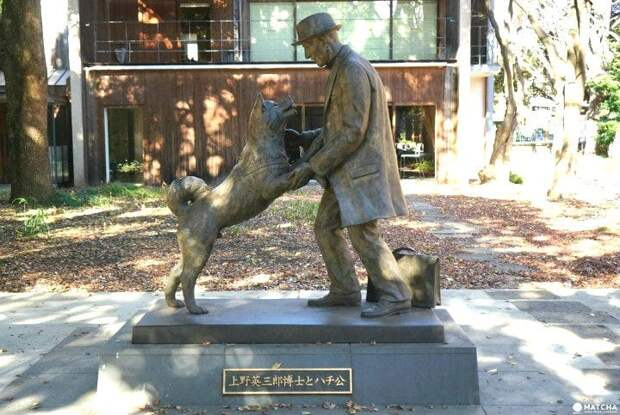 Истинная история Хатико, собаки, которая вдохновила на фильм Ричарда Гира