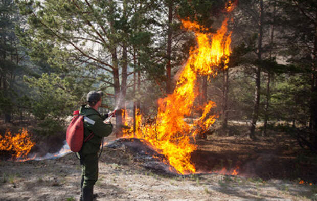 В Тюменской области сгорели десятки дачных домов (видео)