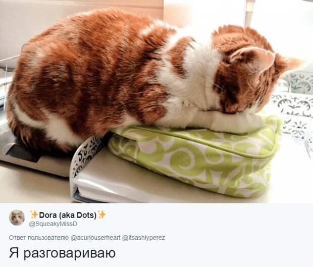 кот притворяется спящим