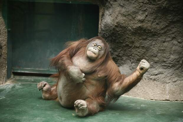 Павильоны с обезьянами, попугаями и змеями в зоопарке Удмуртии будут закрыты для посещения