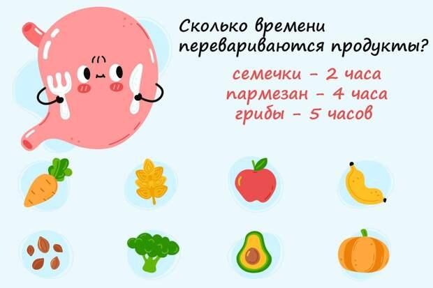 Сколько времени перевариваются разные продукты