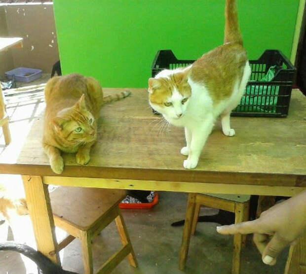 Как отучить кошку залезать на стол
