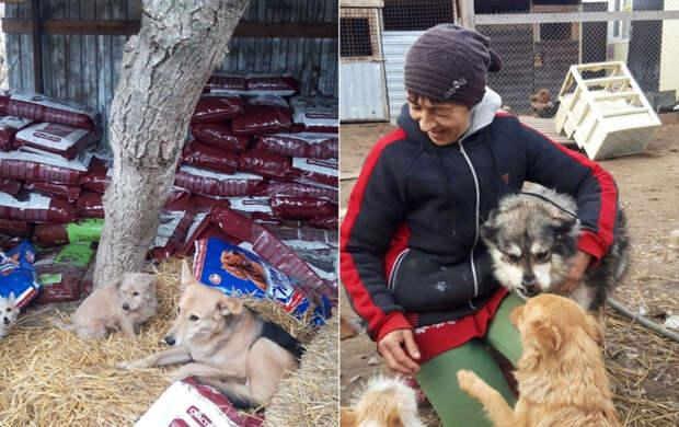 В Крыму начинают строительство приютов для собак