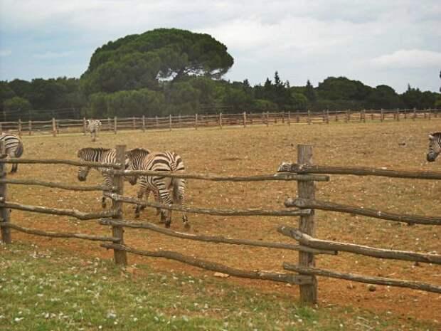 Зоопарк Йосипа Брос Тито на хорватском острове Бриюны
