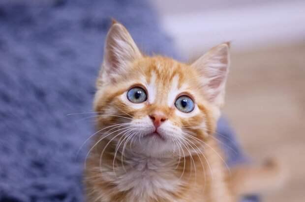 Услышав писк посреди ночи, девушка вышла на улицу, но никого не нашла. А утром она заметила котёнка в кустах