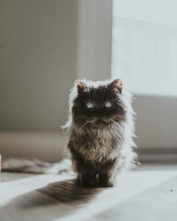 6 фото бесстрашного слепого котёнка Мерлина