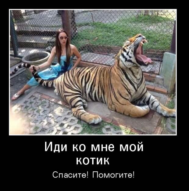 Девушка мучает большого котика
