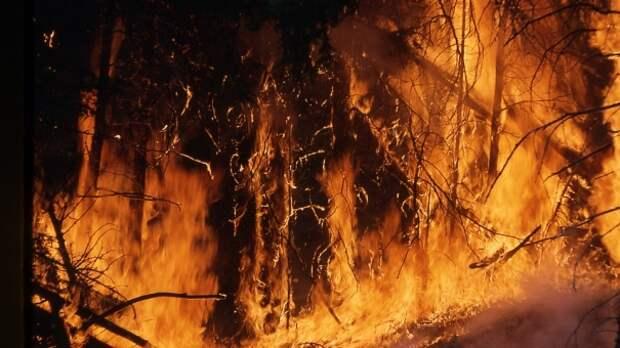 Спасателям удалось локализовать крупный лесной пожар под Феодосией