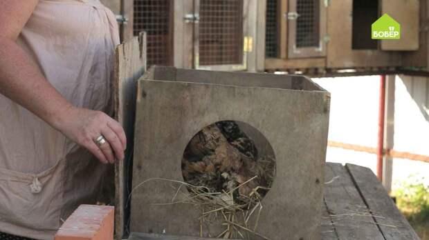Как правильно подготовить гнездо для квочки