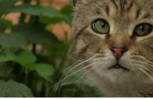 Солдат ВСУ оказался в больнице после нападения луганского кота