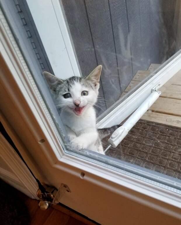 котенок у дверей