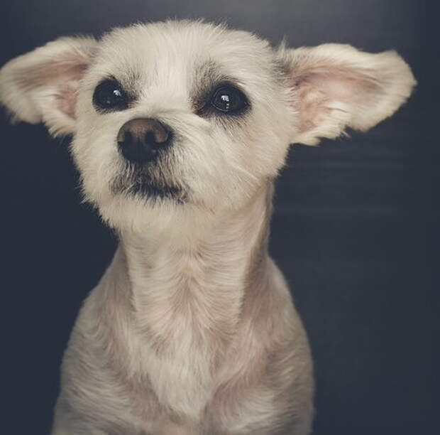 «Соврала, обещала на прогулку, а сама привела к ветеринару!». Собачка укоризненно смотрела на хозяйку-обманщицу