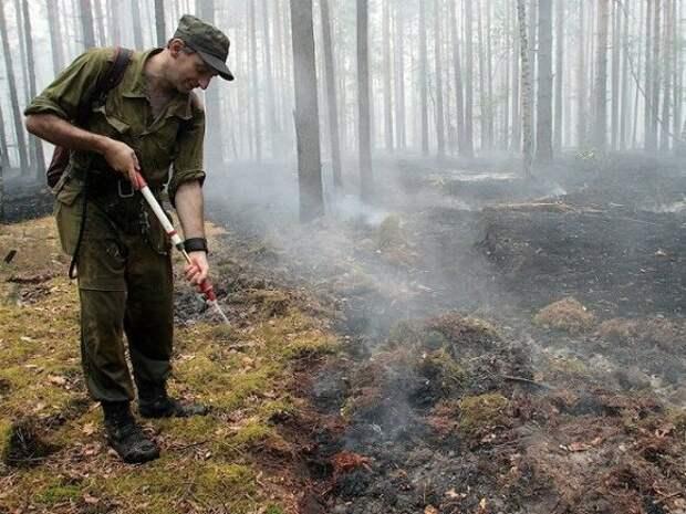 Треть природных пожаров в России возникли из-за выжигания травы